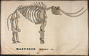 Orra White Hitchcock's illustration of mastodon