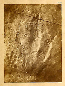 image of representing-fossil-footprints